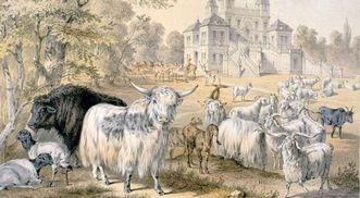 Schloss Favorite Ludwigsburg mit Park und Tieren, Illustration von 1865